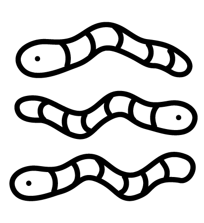 3 squiggly worms